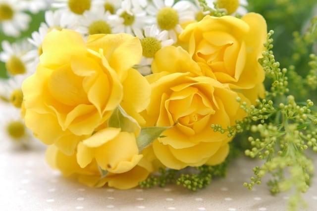 活発な女性には黄色のバラも のイメージ