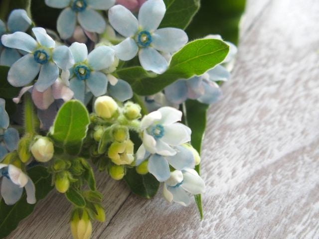 ウェディングブーケ常連の花「ブルースター」のイメージ
