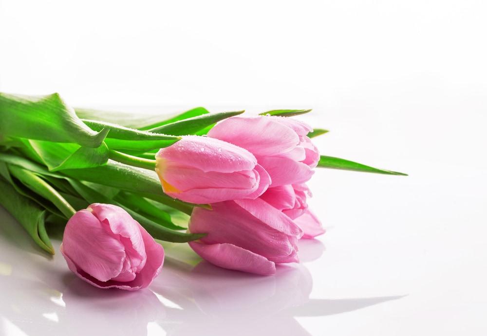 ピンクのチューリップのイメージ